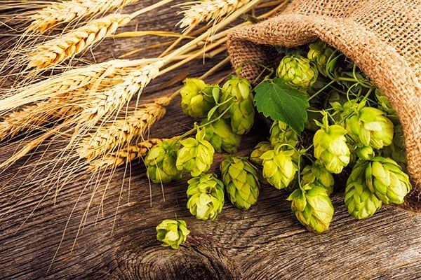 Picture of green hops and wheat laying on top of wood table