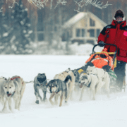Al Eischens practicing to race in the Iditarod Trail.